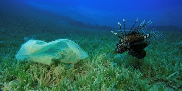 Das Bild zeigt eine Plastiktüte udn einen Fisch Unterwasser.
