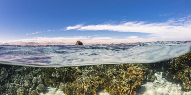 Bild: Die Bewahrung und nachhaltige Nutzung der Ozeane, Meere und Meeresressourcen steht im Vordergrund der UN-Ozeandekade.