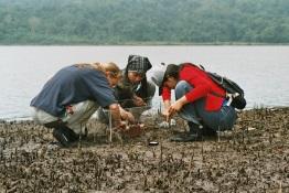 Gemeinsam untersuchen deutsche und indonesische Wissenschaftler die Ökologie von Mangroven in der Segara Anakan Lagune.